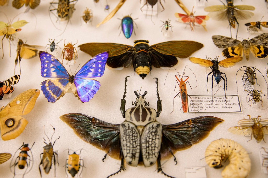 Bug smuggling is big business