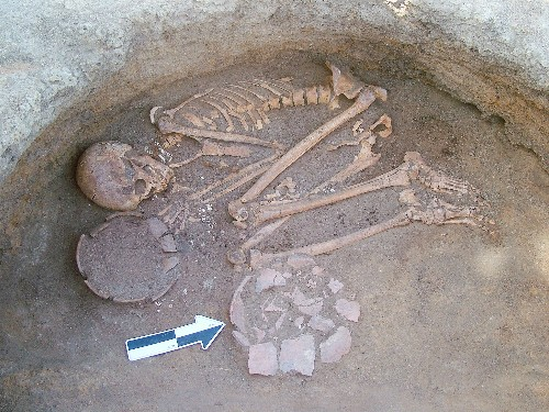 Ancient People Achieved Remarkably Clean Teeth With Noxious Weed?