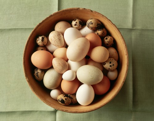 Weird Animal Question of the Week: Oddest Eggs of the Animal Kingdom