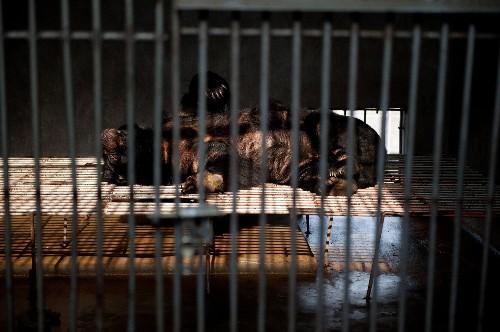Five Ways China's Wildlife Protection Law Will Harm Wildlife