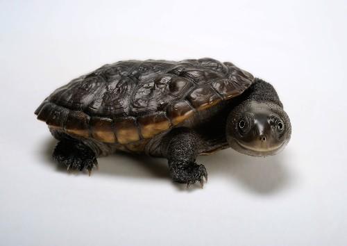 17 Surprisingly Cute Photos of Turtles