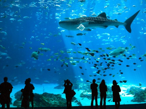 Free to See: 20 U.S. Animal Viewing Spots