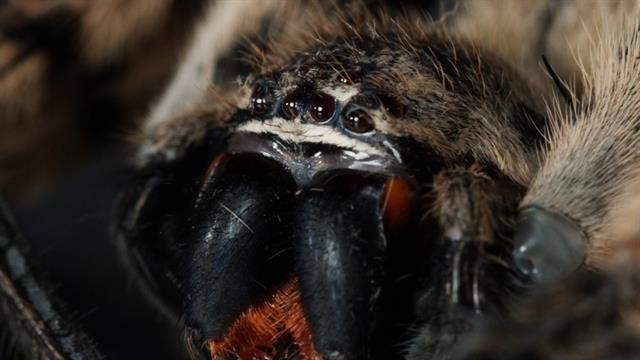 New fossil spiders with 'glowing' eyes found in South Korea