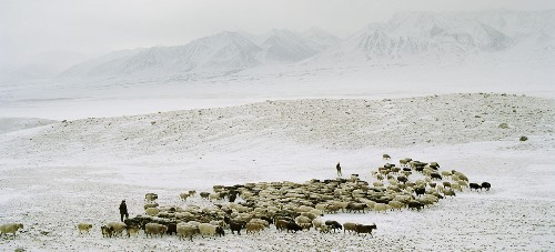 We Are What We Eat: The High Altitude Diet of Afghanistan's Nomads