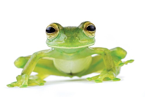 Here's how travelers can help protect frogs in Costa Rica