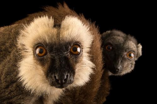 Primate Pictures