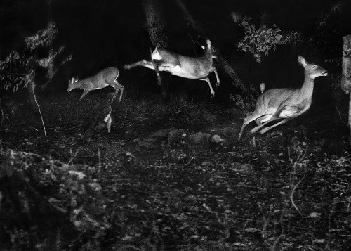 Meet Grandfather Flash, the Pioneer of Wildlife Photography
