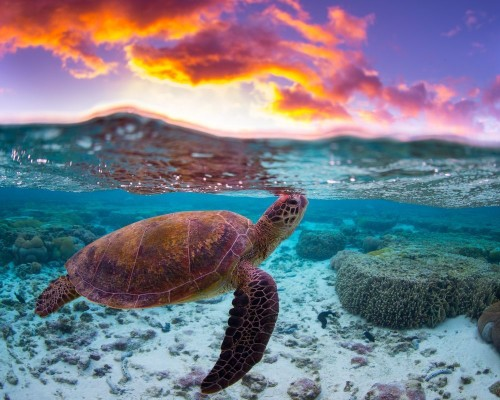 Turtle Sunset Photo by mitchell pettigrew — National Geographic Your Shot
