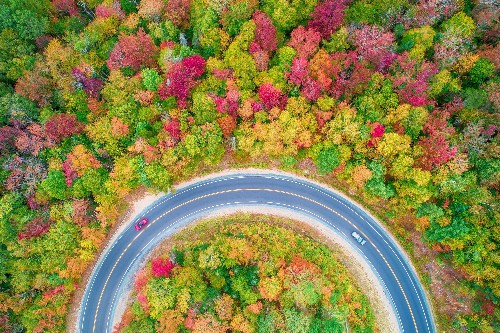 Vibrant Photos of Foliage From Above