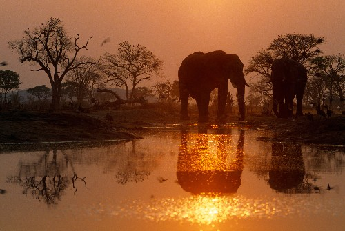 Breaking: Pro-Ivory Trade Country's Change of Heart Upends Elephant Debate