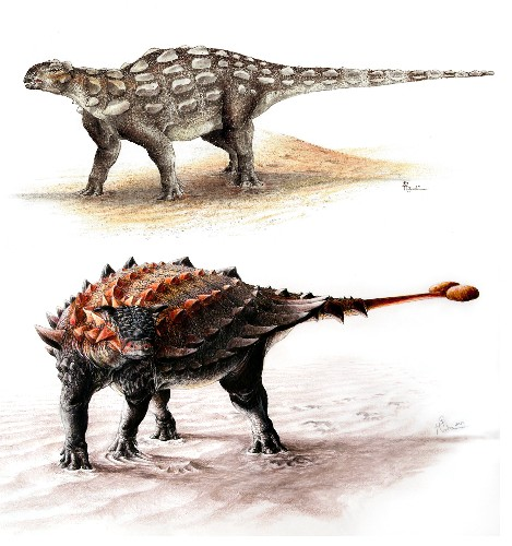Join the Club – How Ankylosaurs Evolved Their Formidable Tails