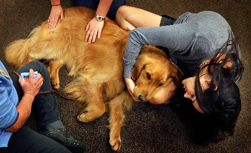 After the Bombing, Comfort Dogs Come to Boston