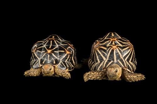 Shocking report details massive illegal turtle trade network