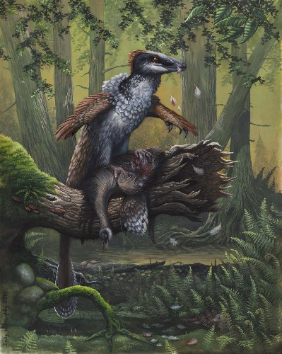 Did Dakotaraptor Really Face Off Against Tyrannosaurus?