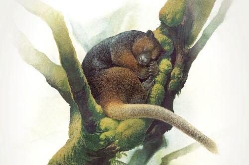 Rare Tree Kangaroo Reappears After Vanishing for 90 Years