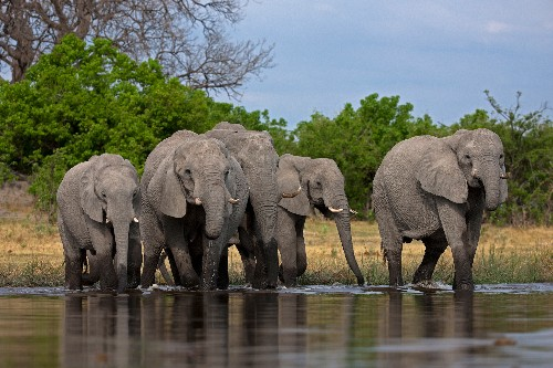 How strong is Africa's last elephant stronghold?