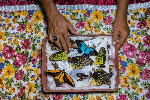 National Geographic's best stories of 2018