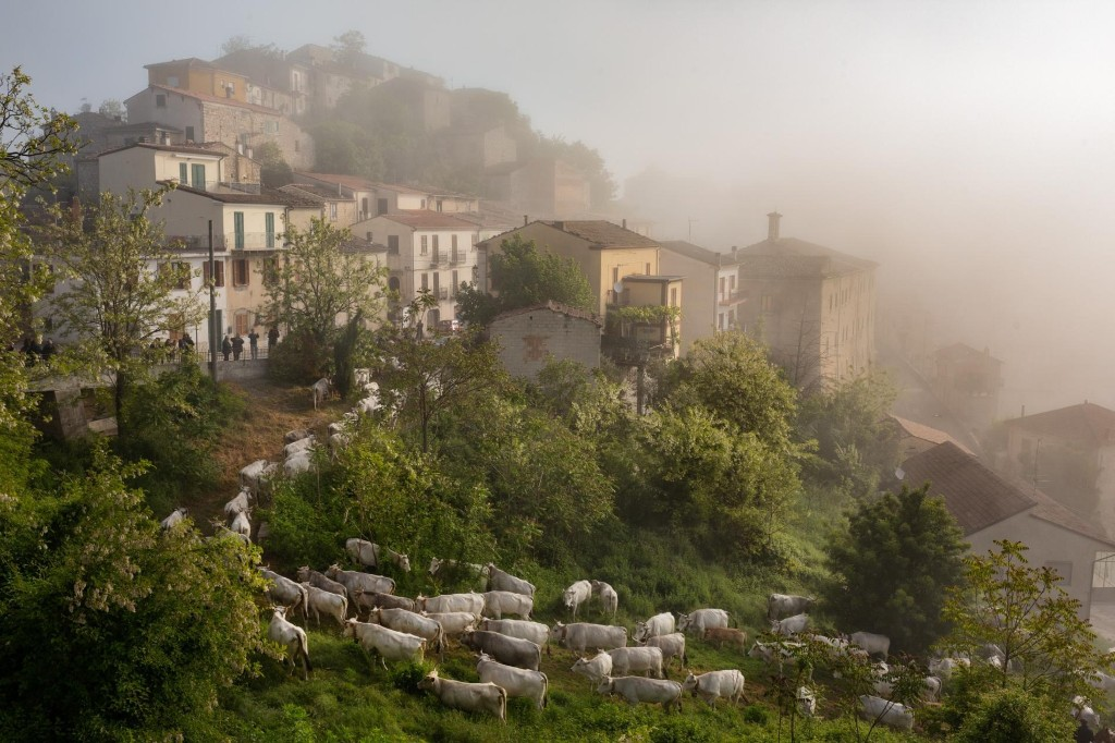 What you can learn by following the herd in Italy