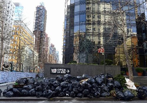 Bugs, Spiders Keep NYC Clean by Eating Garbage