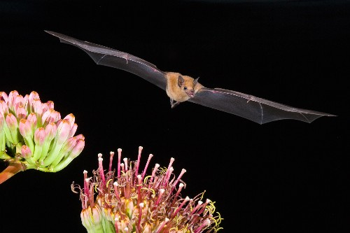 Light pollution hurts urban bats. Trees can help.