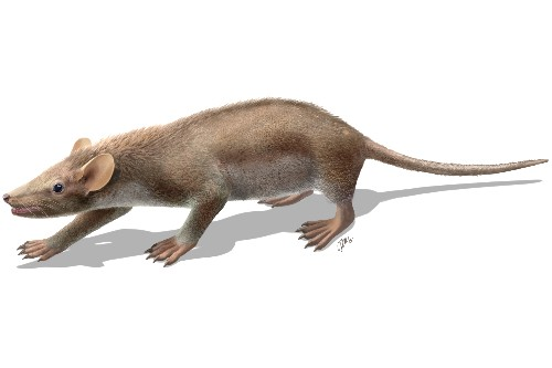 New Spiky-Haired Mammal Roamed During Dinosaurs' Heyday