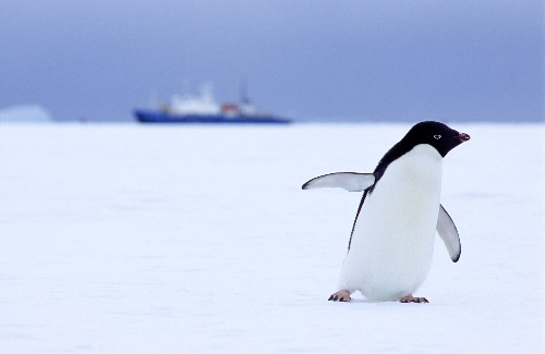 Antarctic Research Bases Spew Toxic Wastes Into Environment