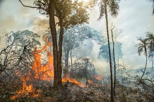 Ancient farmers burned the Amazon, but today's fires are very different