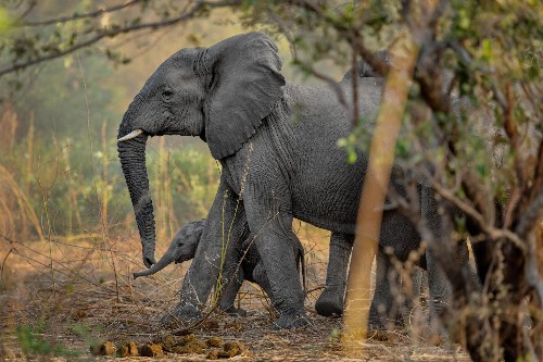 The Rare African Park Where Elephants Are Thriving