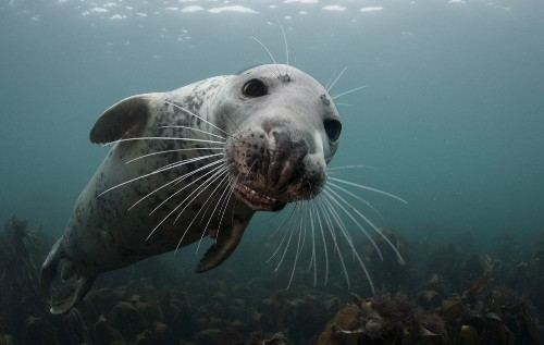 Top Underwater Photos from National Geographic Your Shot