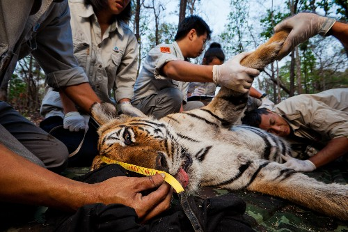 """""""Cyberpoaching"""" Feared as New Threat to Rare Wildlife"""
