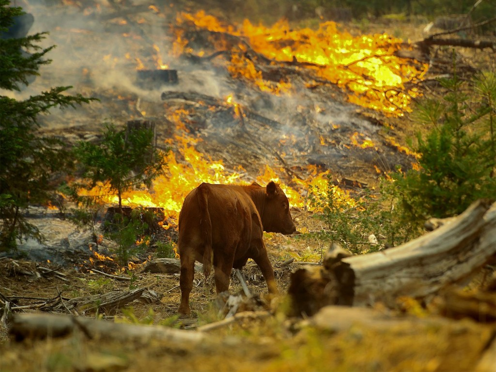 What do wild animals do in wildfires?