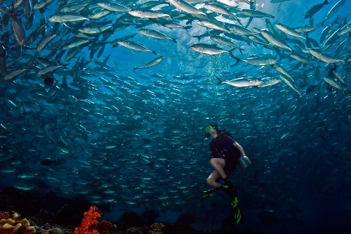 The World's Greatest Scuba Diving Spots