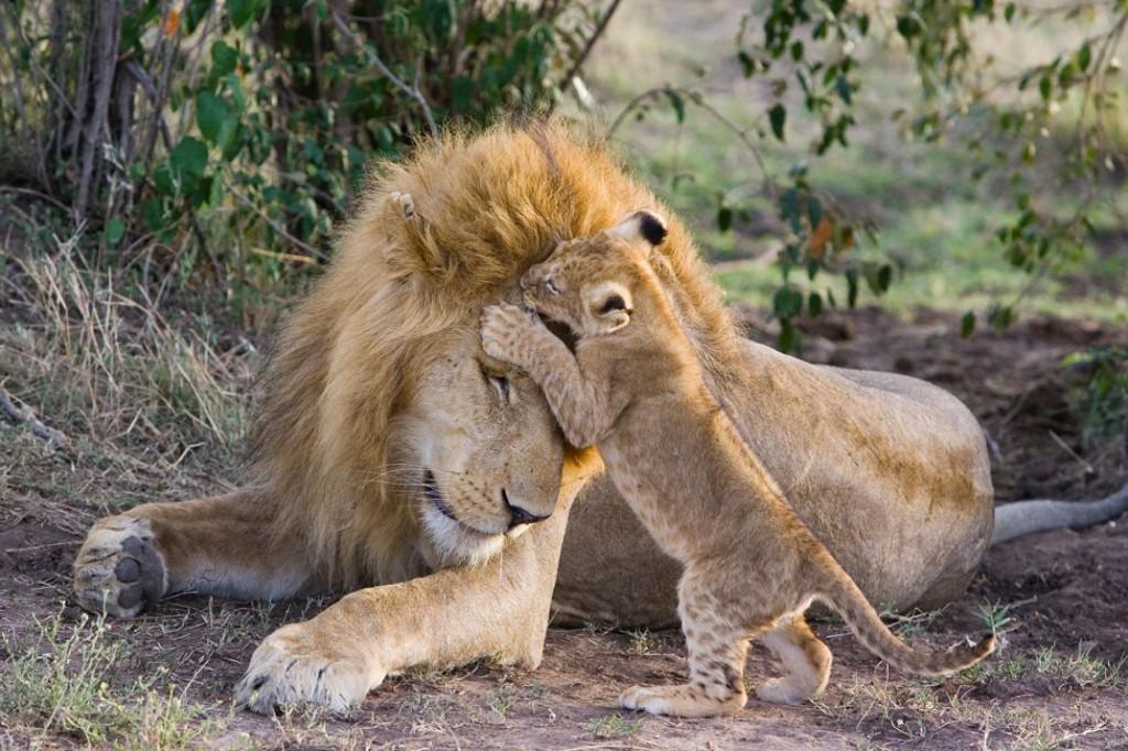 Amazing animal dads
