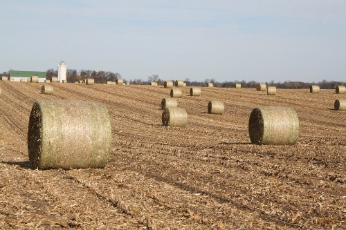Corn Waste for Biofuel Could Boost Emissions, Study Finds