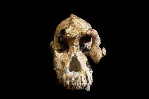 'Unprecedented' skull reveals face of human ancestor
