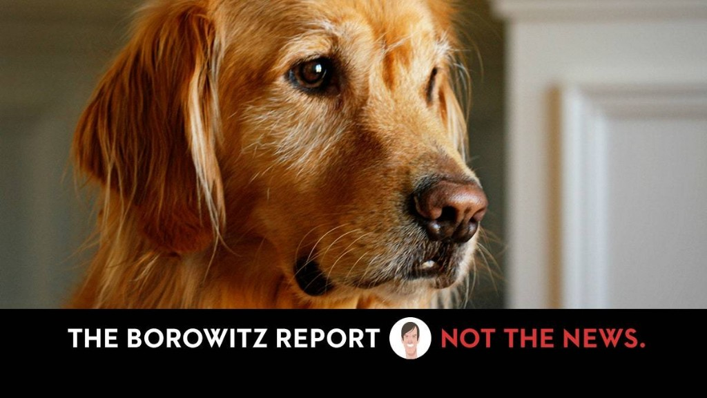 Trump Claims Dog Ate His Health-Care Plan