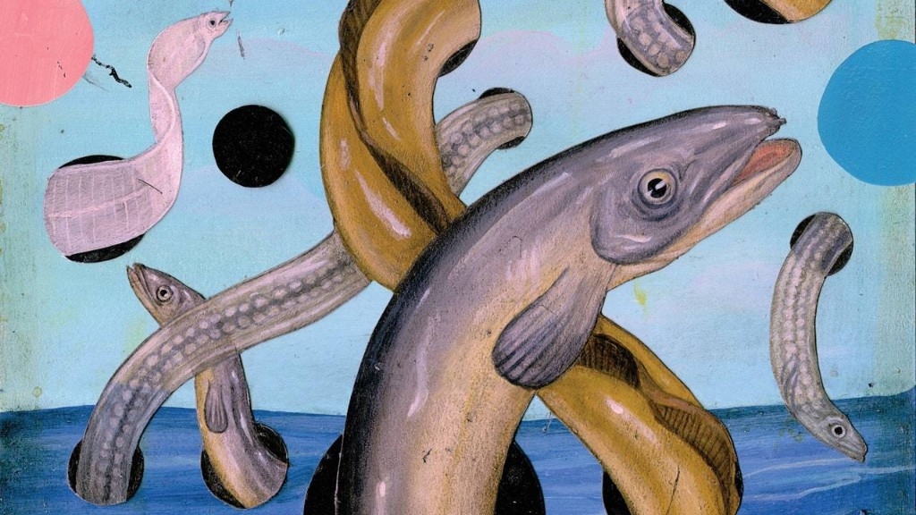 Where Do Eels Come From?