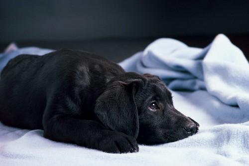 In Latest Humiliation, Boris Johnson's Dog Resigns As His Pet