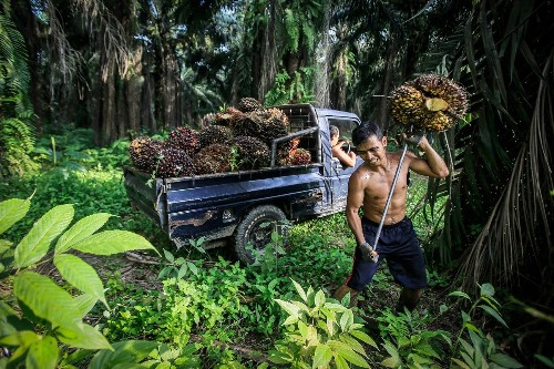The Violent Costs of the Global Palm-Oil Boom