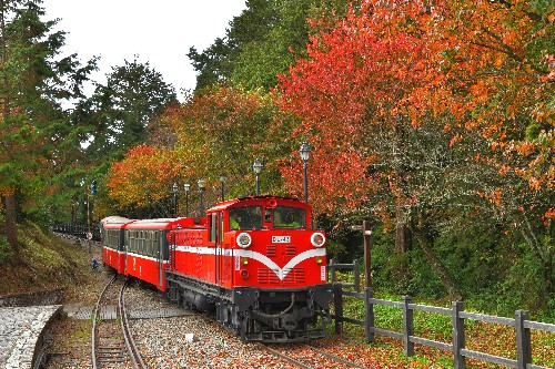 Enjoy the wonderful colors of fall with Alishan forest railway tour
