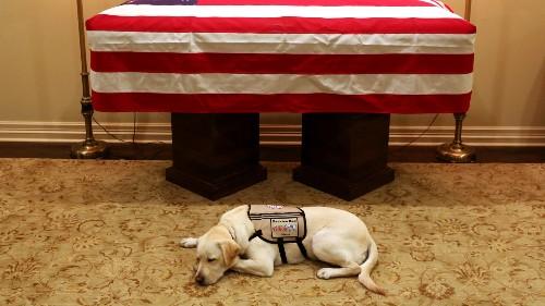 George H.W. Bush's Service Dog Stays By His Casket