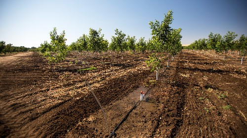 From Almonds To Rice, Climate Change Could Slash California Crop Yields By 2050