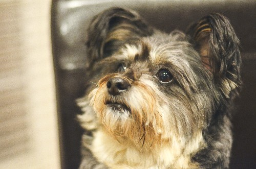 Questions Rise About Shortcomings Of DNA Tests For Dogs