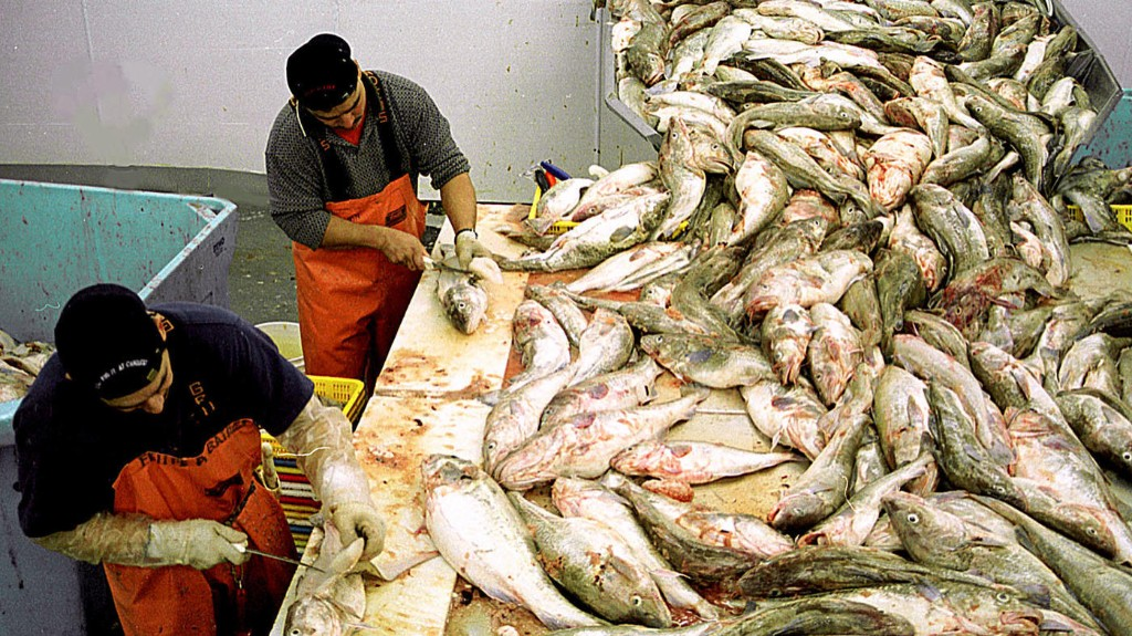 COVID-19 Outbreak In Pacific Northwest Seafood Industry As Season Ramps Up