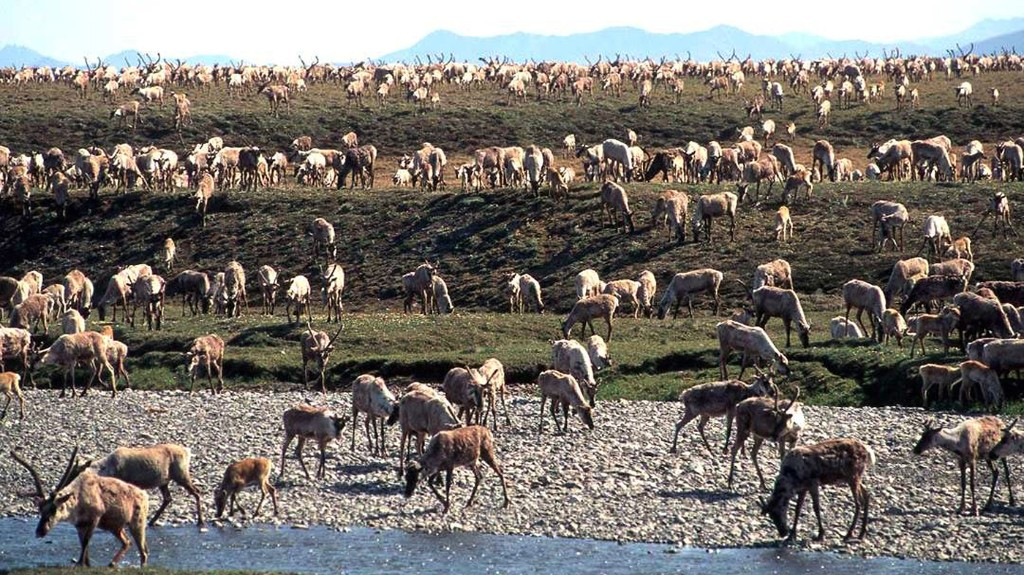 Trump Administration Sets Last Minute Oil Lease Sale For Arctic Wildlife Refuge