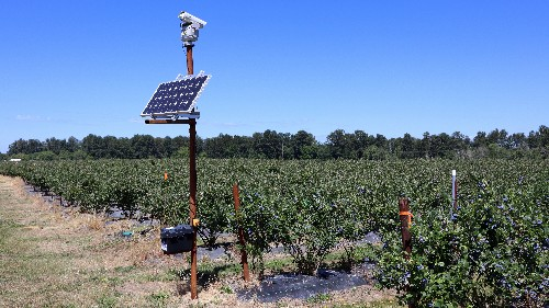 Growers Are Beaming Over The Success Of Lasers To Stave Off Thieving Birds
