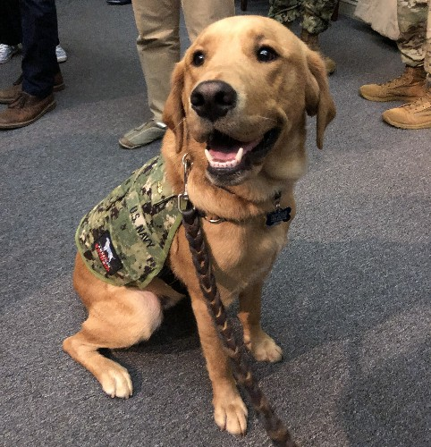 High-Ranking Dog Provides Key Training For Military's Medical Students