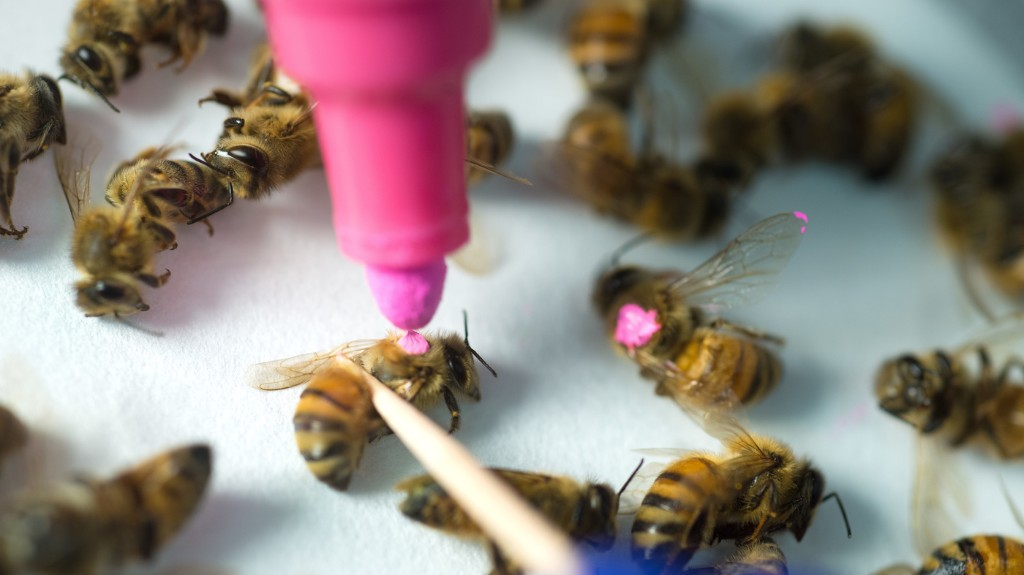 Study: Roundup Weed Killer Could Be Linked To Widespread Bee Deaths