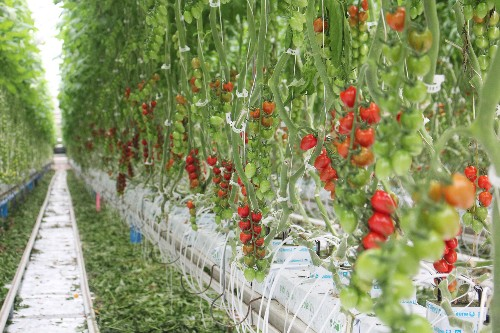 How Canada Became A Greenhouse Superpower