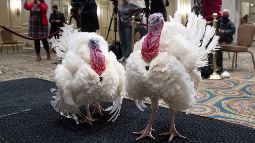 Trump To Pardon Turkey Again, Trying To Show Normalcy Amid The Abnormal